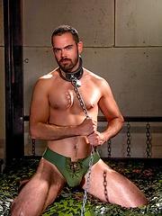 Dolan Wolf in chains